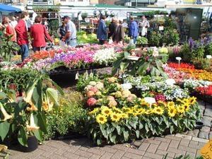Festival fleurs et jardins