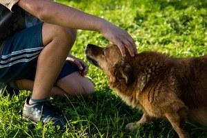 """""""A l'écoute du monde animal"""" conférence par C. Bouteraon"""